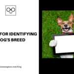 5 Apps For Identifying Your Dog's Breed Instantly